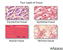 Tissue types