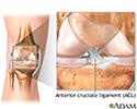 Normal knee anatomy