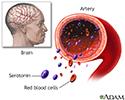 Serotonin uptake